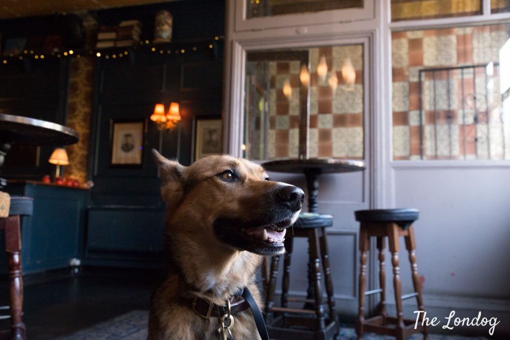 Dog at The Dundee Arms in Bethnal Green
