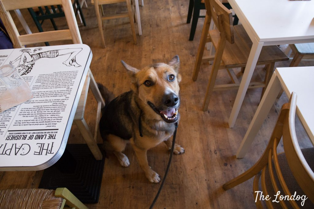 rescue mutt between the tables at dog-friendly vegan restaurant