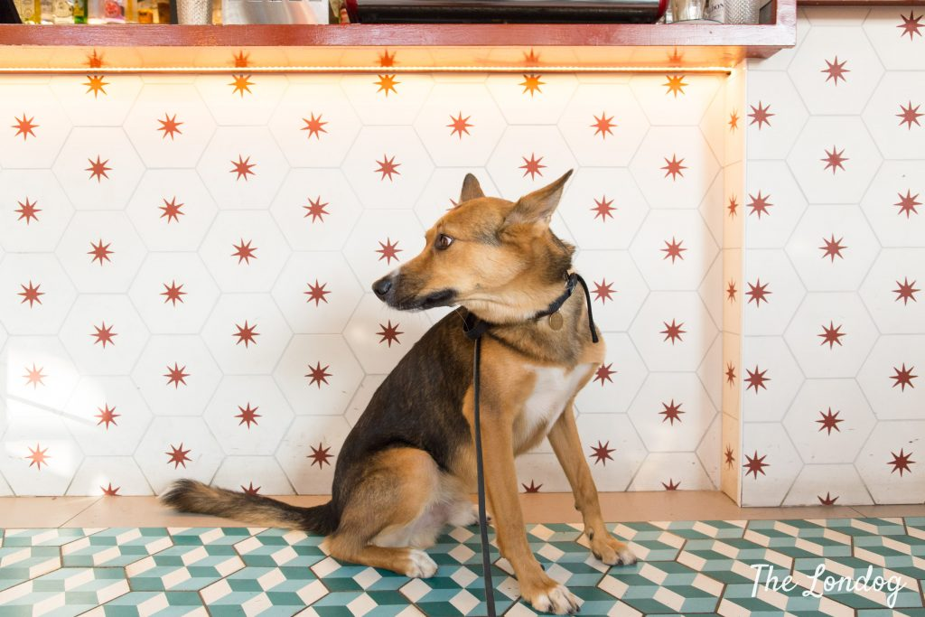Dog at a dog friendly eatery in Bethnal Green East London
