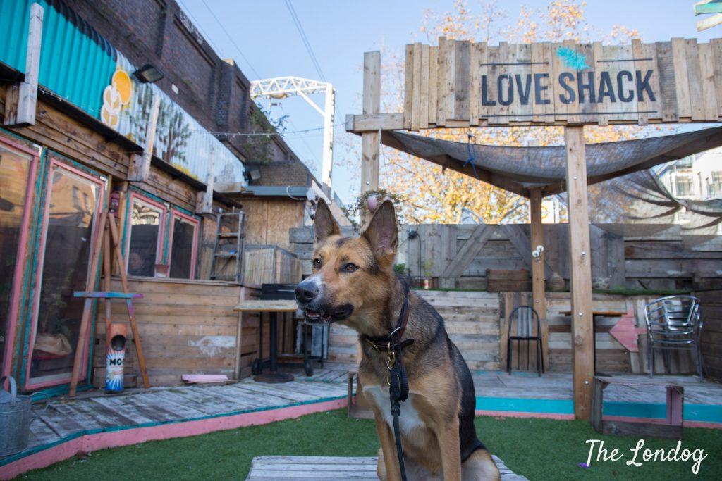 Dog at Love Shack London