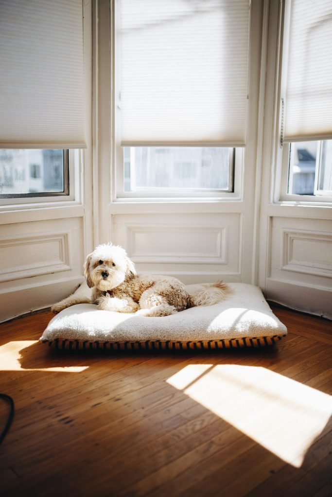 dog on his bed under a window in a flat