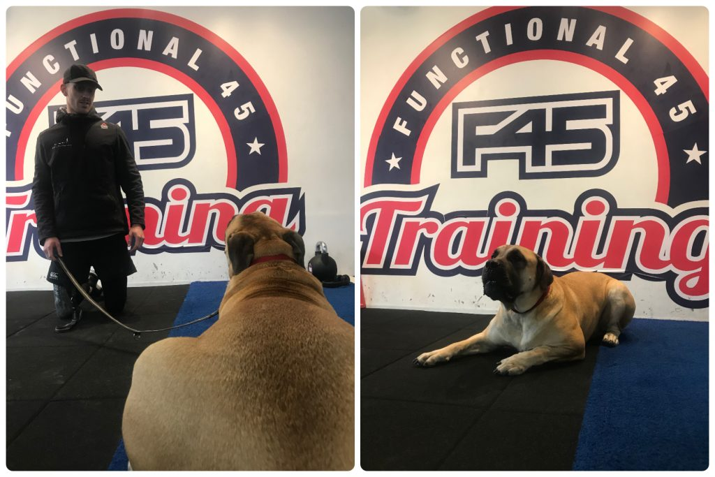 Dog at F45 Training Fulham