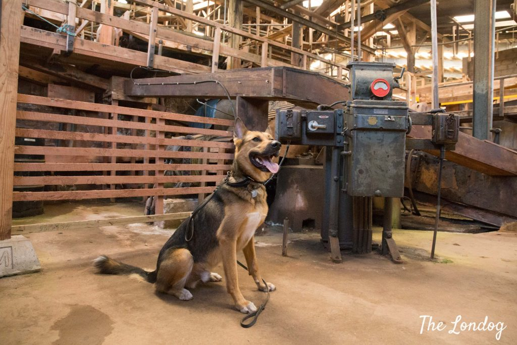 Dog at the Geevor Tin Mine in Cornwall