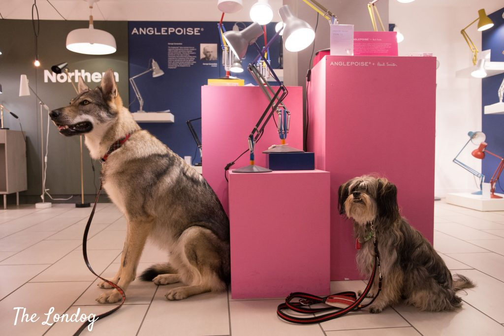 Small and large dogs at Heal's store in London in the lighting department