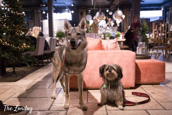 Wolfdog and rescue dog at dog-friendly store in London