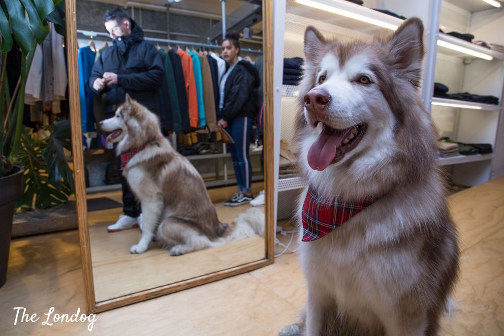 Dog in the mirror at Carhartt dog-friendly store in Covent Garden