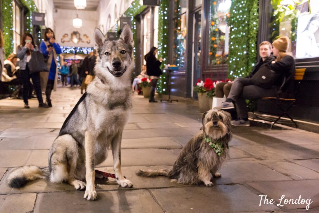 wolfdog and rescue dog in covent garden at Christmas time