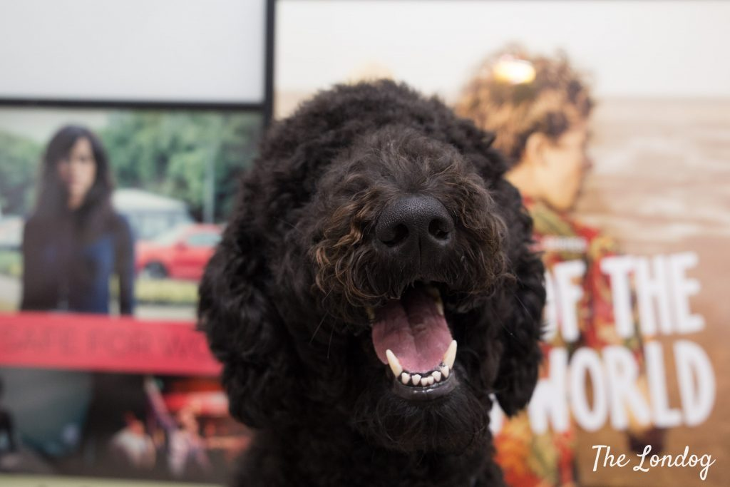 Black Labradoodle office dog of Clerkenwell Films in front of film posters
