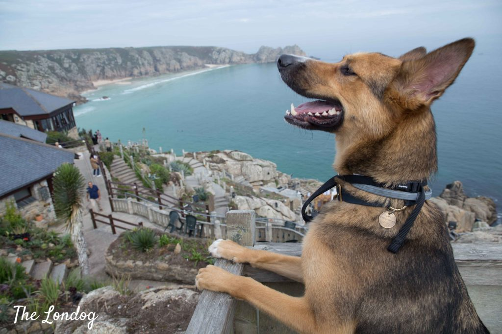 Dog looks at the sky from the top of the Minack Theatre in Porthcurno on a late Summer day