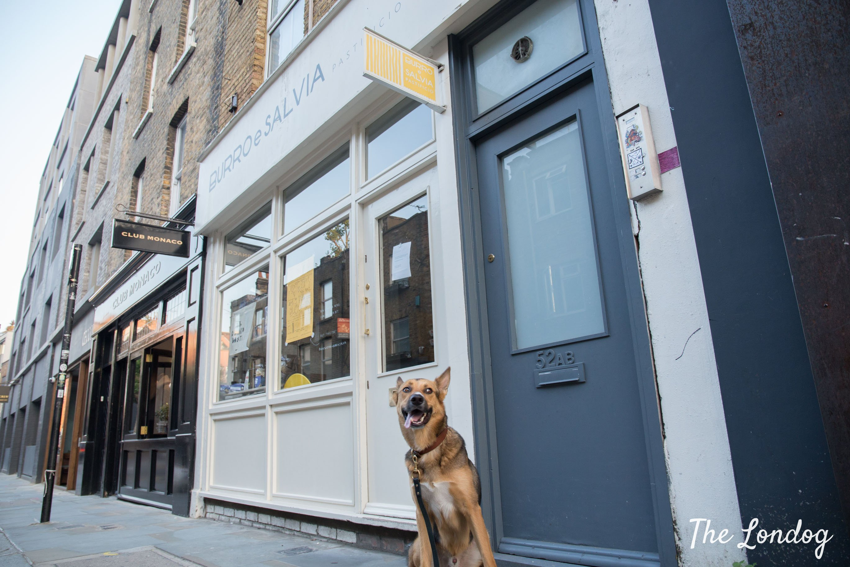 Large dog outside dog-friendly Italian restaurant in London Shoreditch