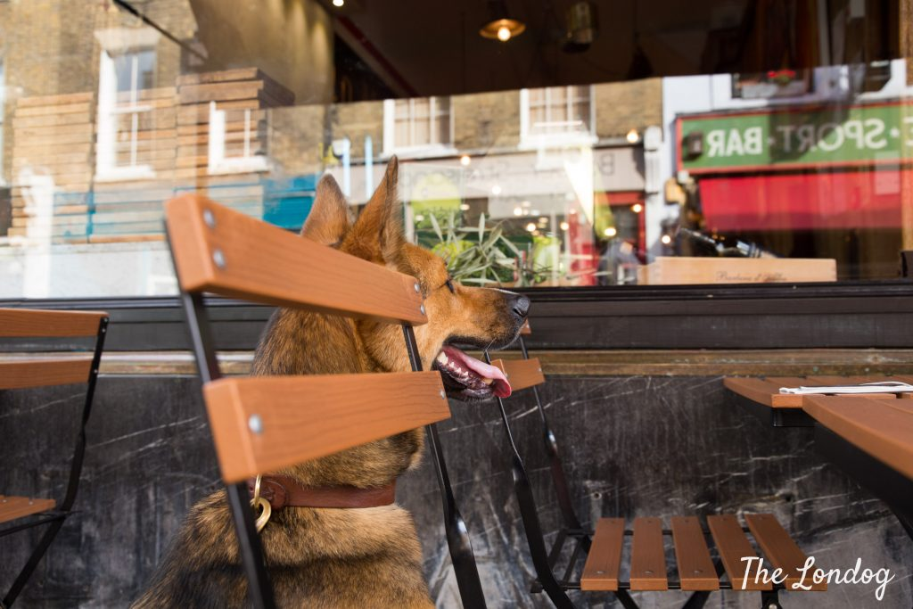 Dog looks interested at dog-friendly Italian restaurant