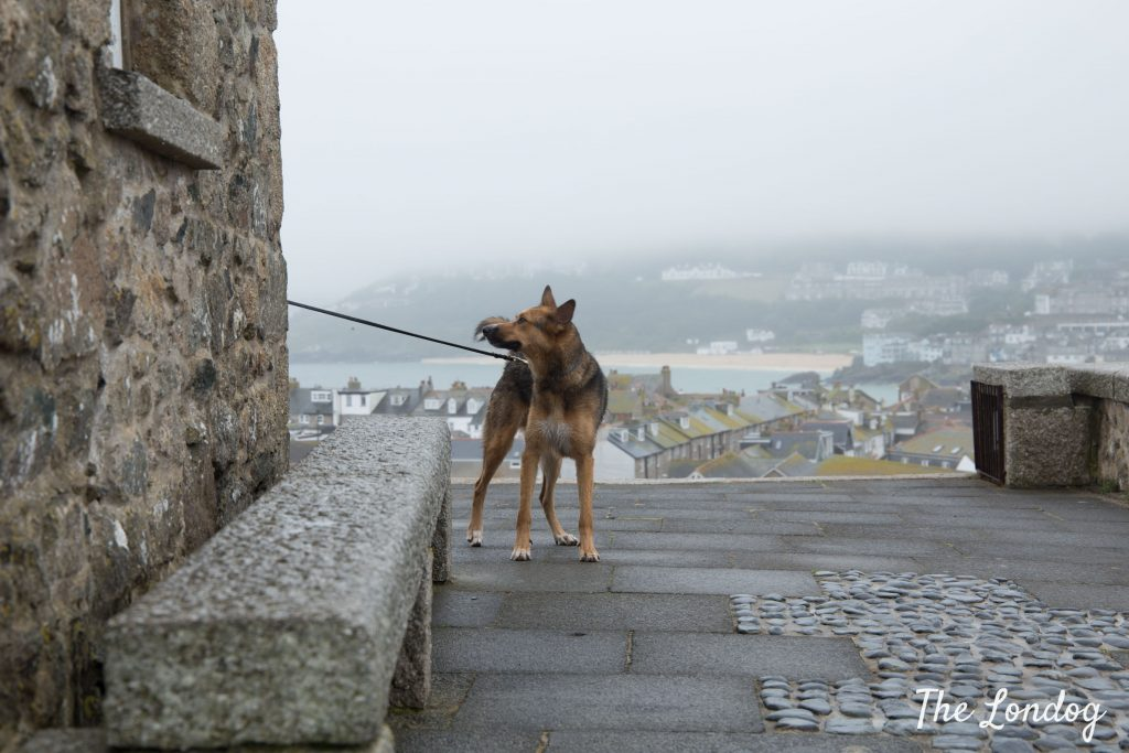 Dog on a foggy day in St Ives