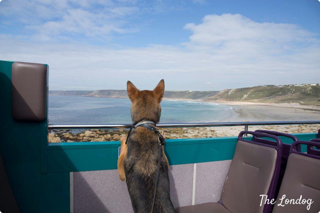 Dog on bus Sennen Cove