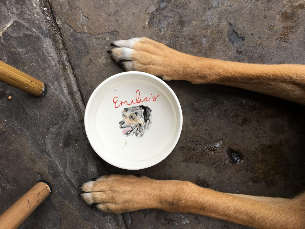 Dog paws on the sides of dog water bowl