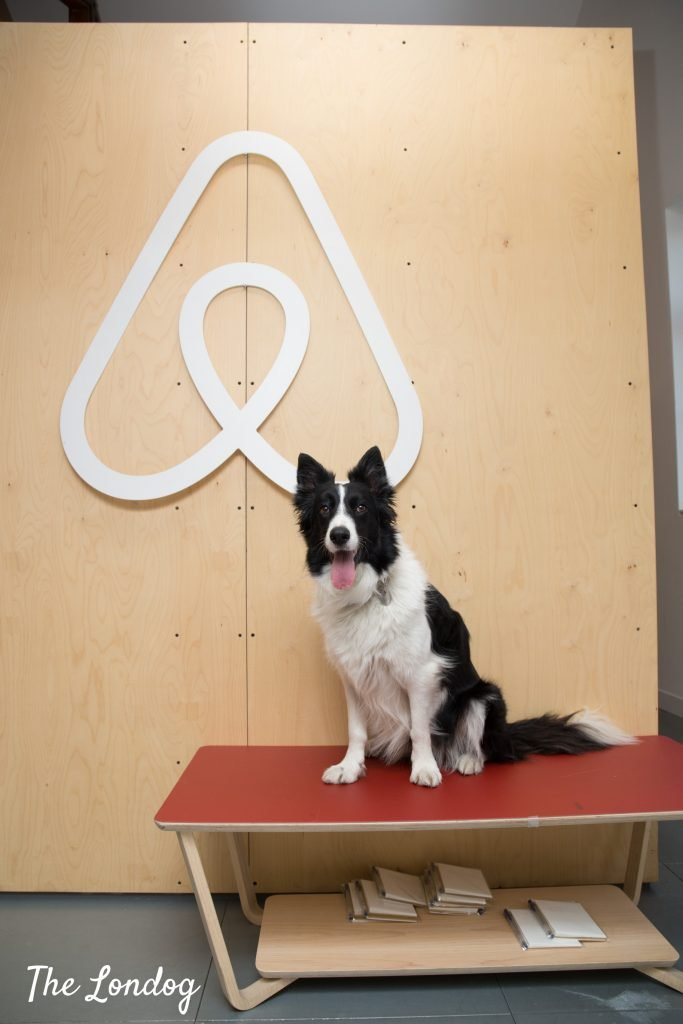 Office dog sitting on a red wooden bench, under Airbnb's wooden logo at their HQ