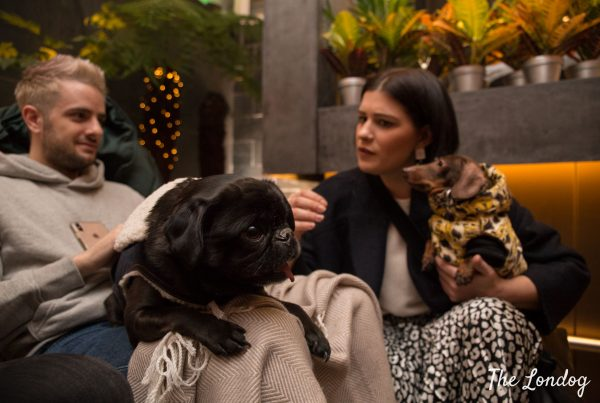 Suki the black pug lies on her owner's lap, while Pop the Sausage dog and her ower talk with him at the Secret Garden of South Place Hotel