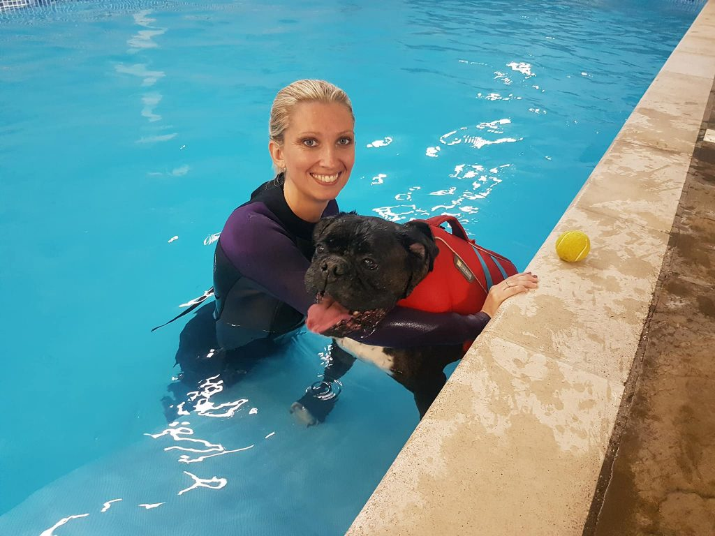 Boxer dog in swimming pool with instructor