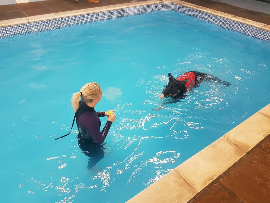 Dog swims in indoor swimming pool fetching a ball