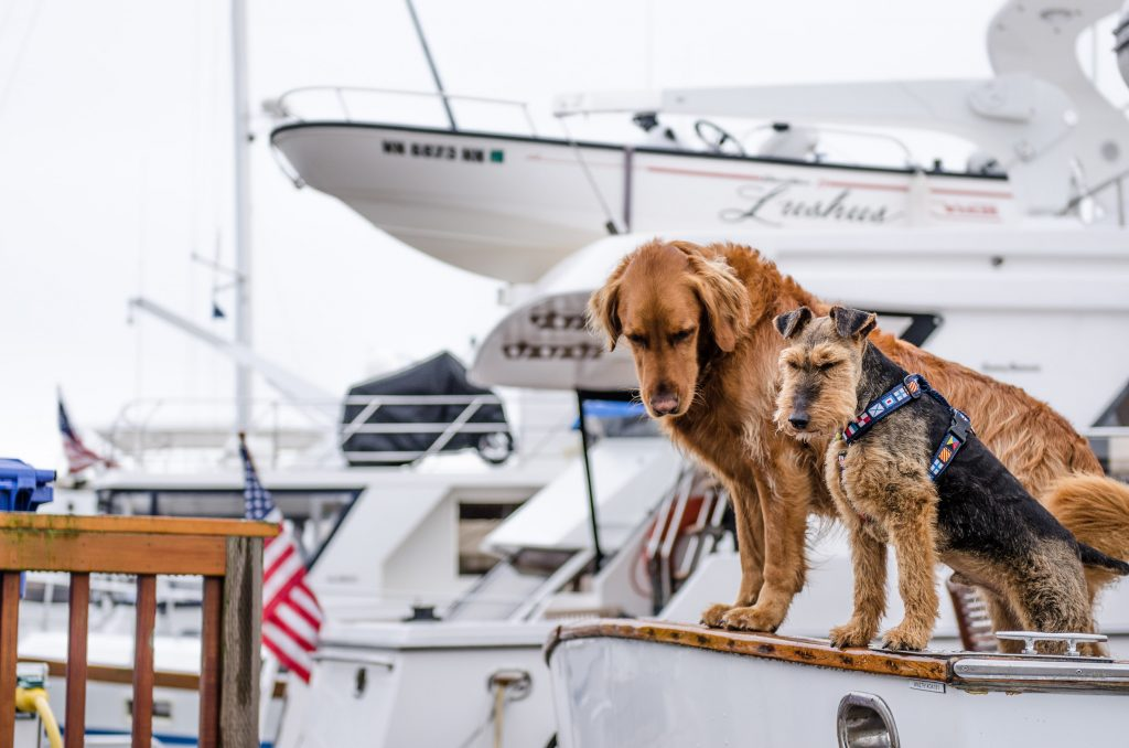 Two dogs on a yacht at the harbour