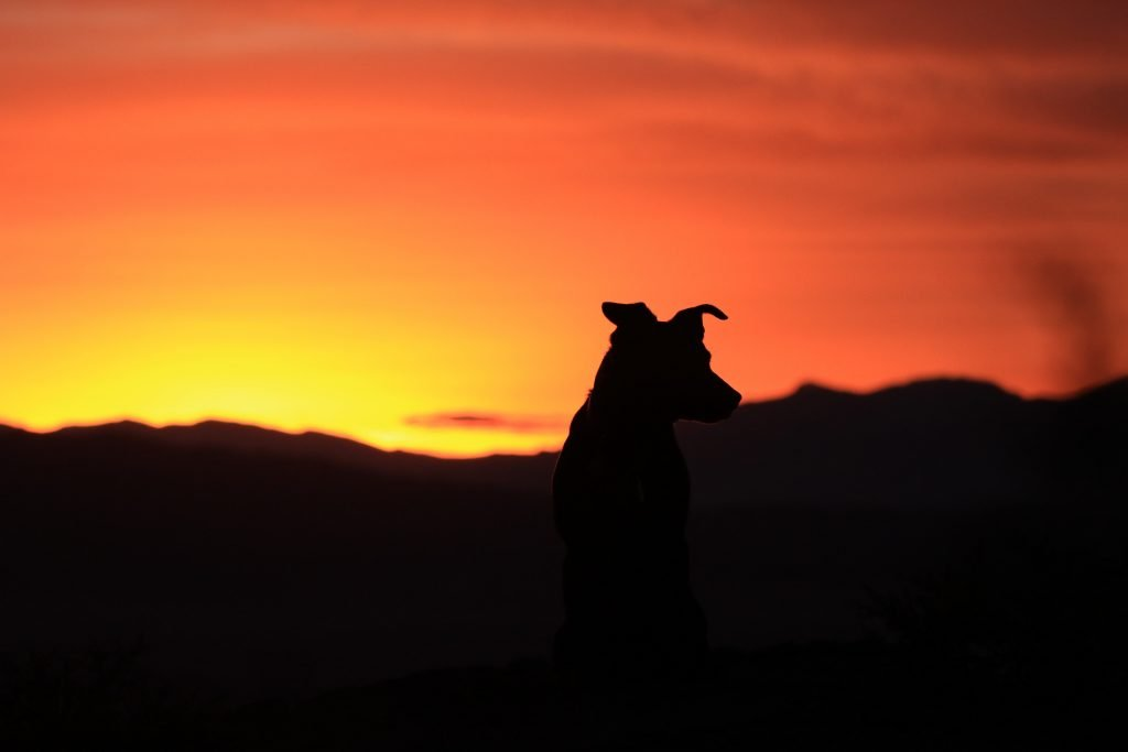 dog silhouette at sunset