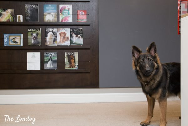 Dog at the kennel club headquarters in front of magazine rack