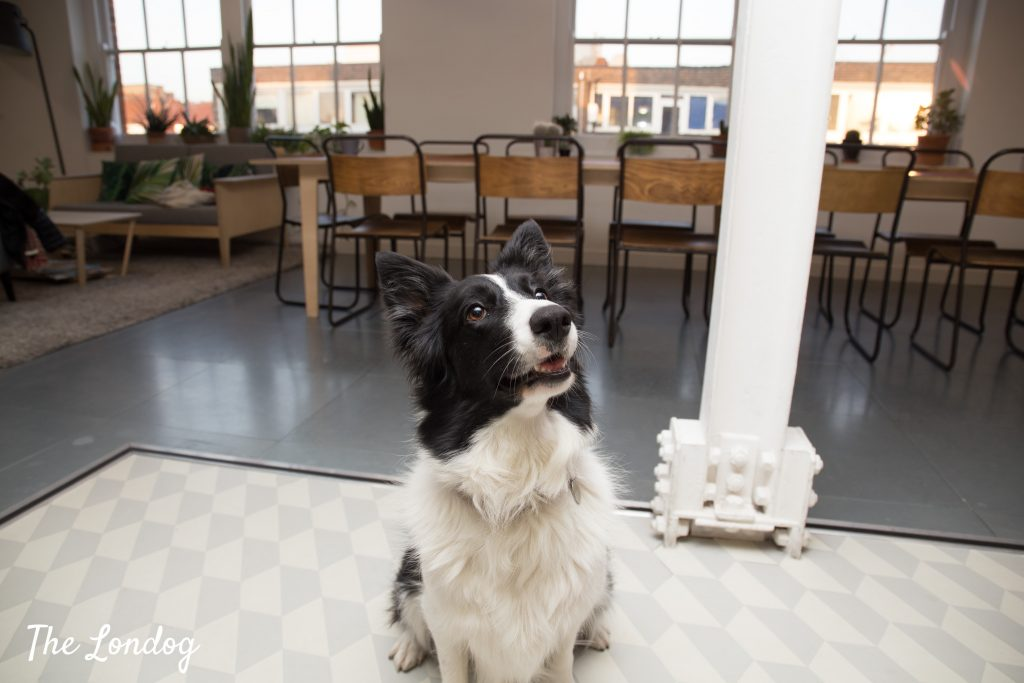Office dog at Airbnb office