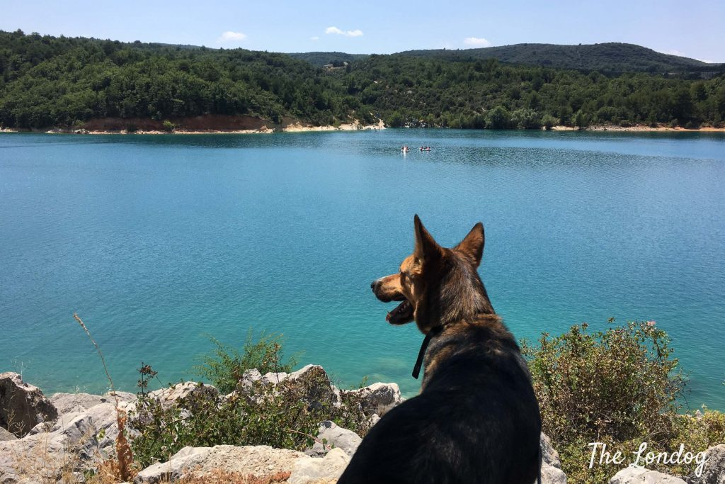 Dog looks at body of water on holiday