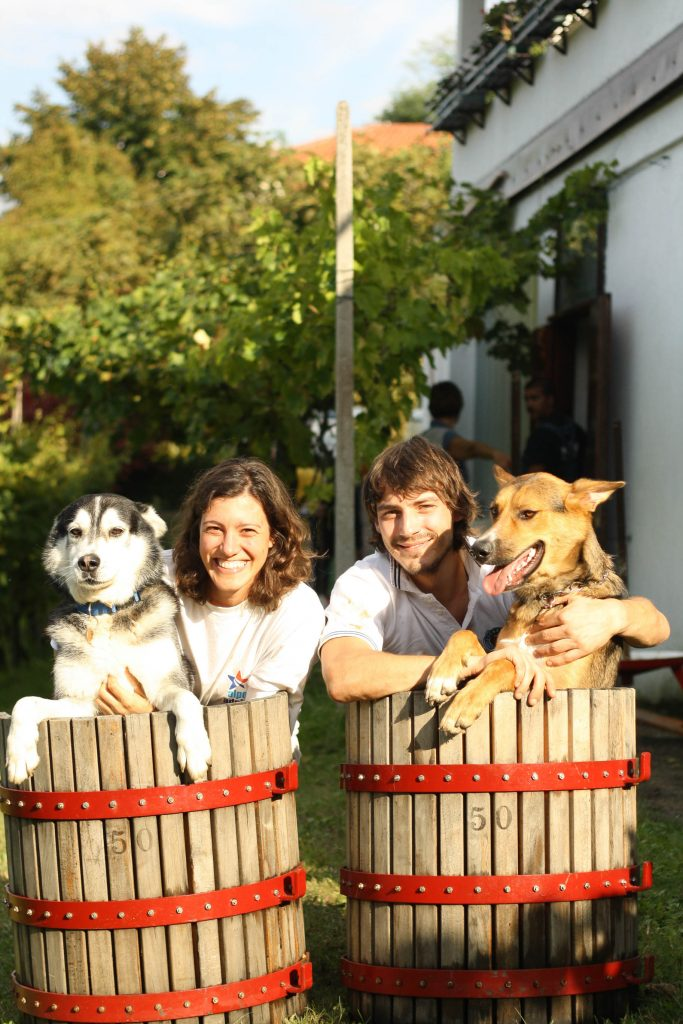Two large dogs sit with two humans in the grapes press