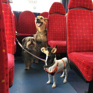 Three rescue dogs on a double deckerbus in Brighton