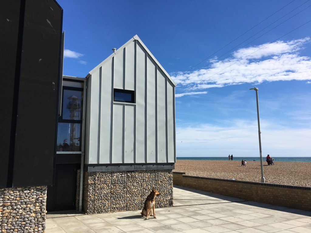 German Shepherd dog sits near a beach house looking at the sea in Brighton