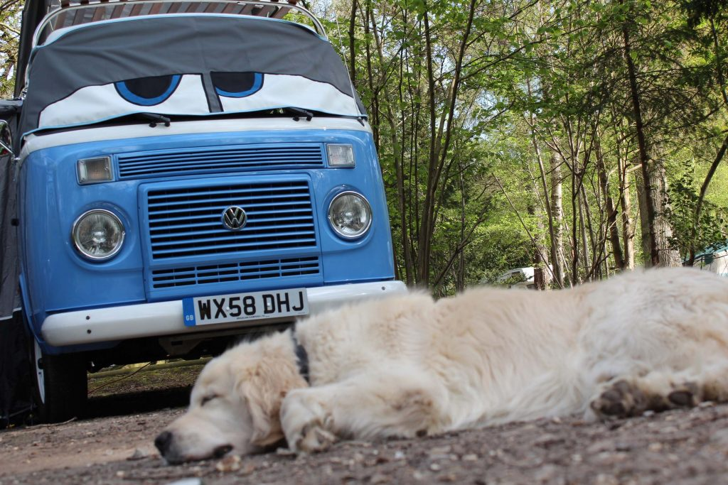 Dog lays on the ground in front of blue parked VW camper in the woods
