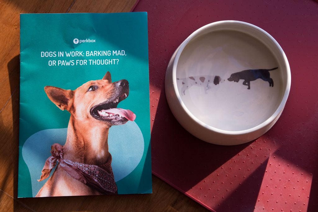 Perkbox Cuddle Club booklet on the floor with dog bowl