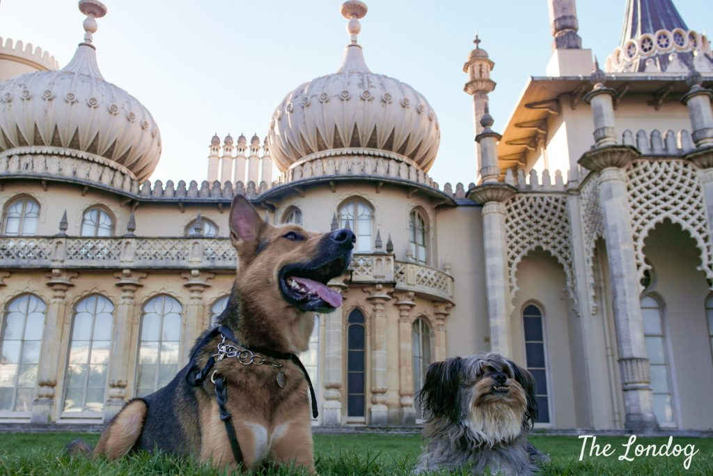 Two dogs on the grass in front of the Royal Pavilion in Brighton on a sunny day