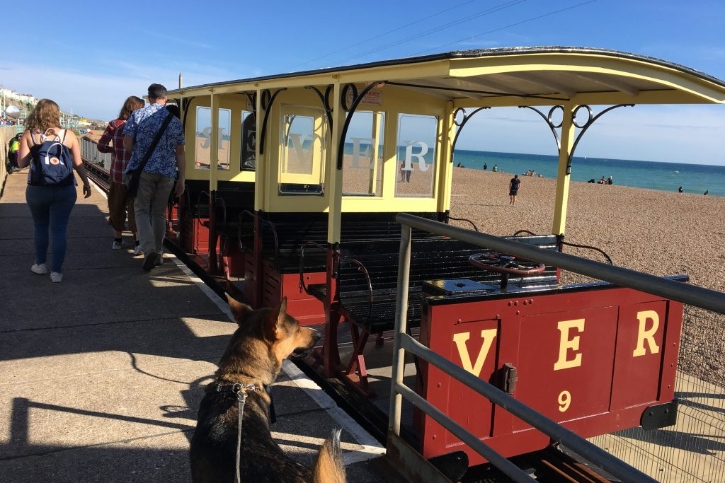 Dog waits to get on Volks' Electric Railway on a sunny day