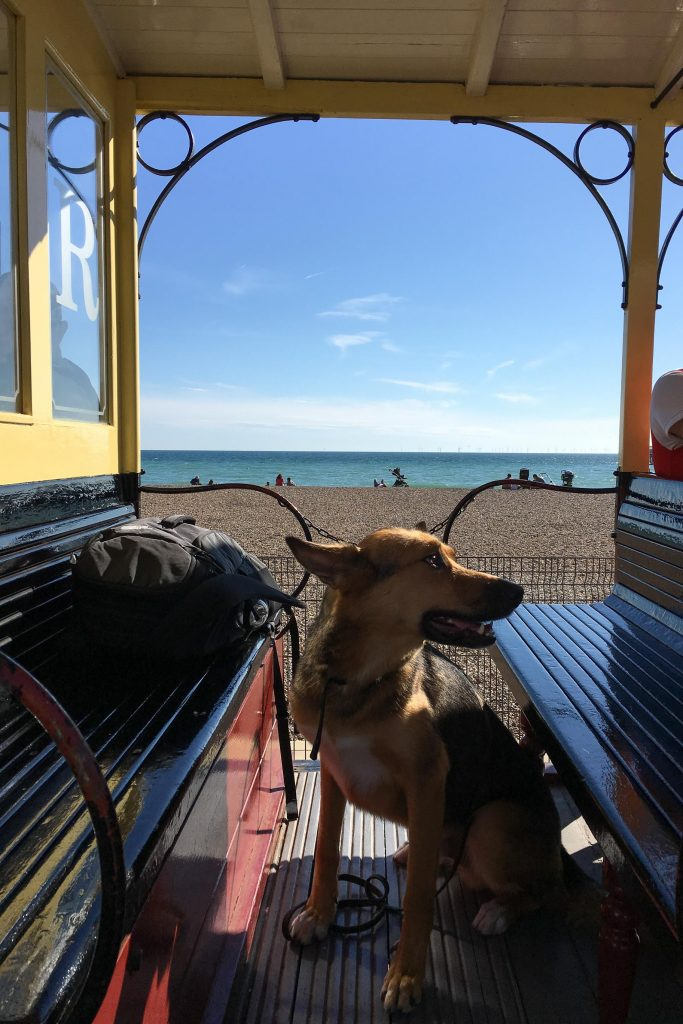 Large dog sits in car of Volks Electric Railway with beach on the background