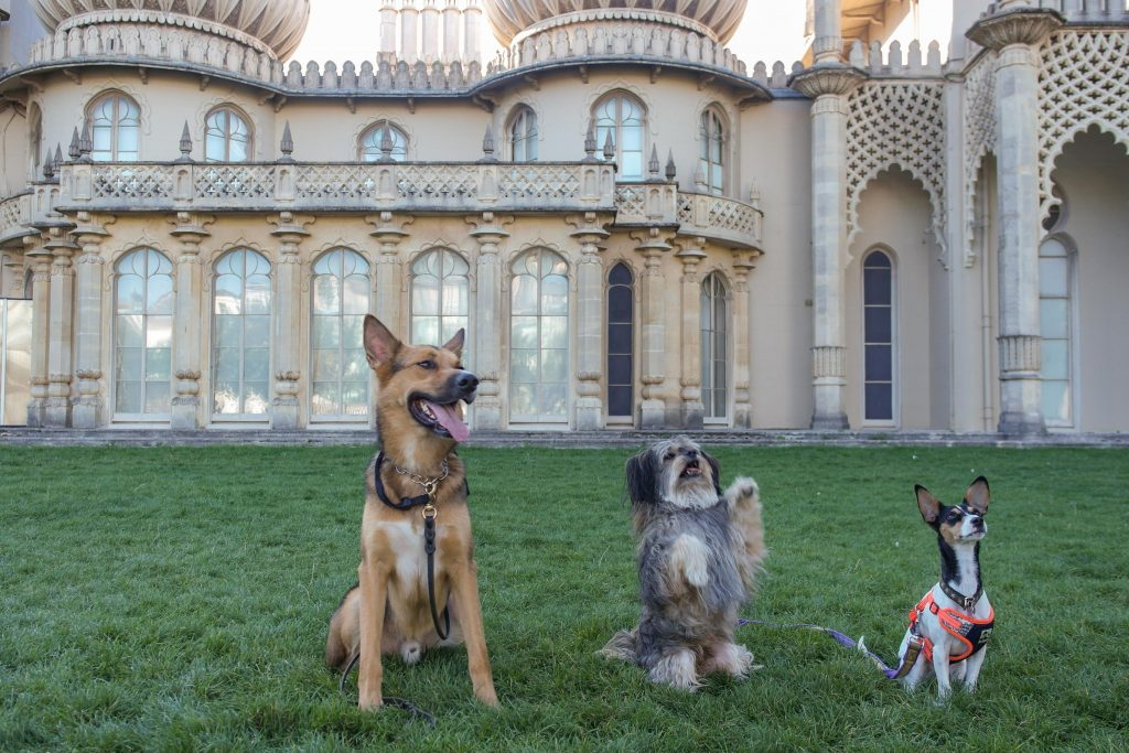 three dogs at the Royal Pavilion Garden on the grass