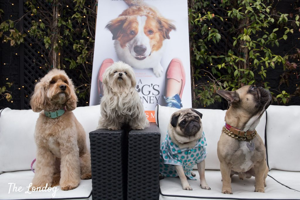 Dogs on sofa at A Dog's Journey launch event