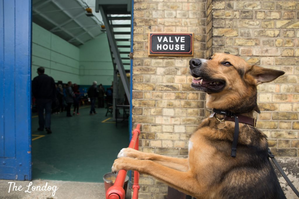 Dog perched on railway outside valve house at Crossness Pumping Station