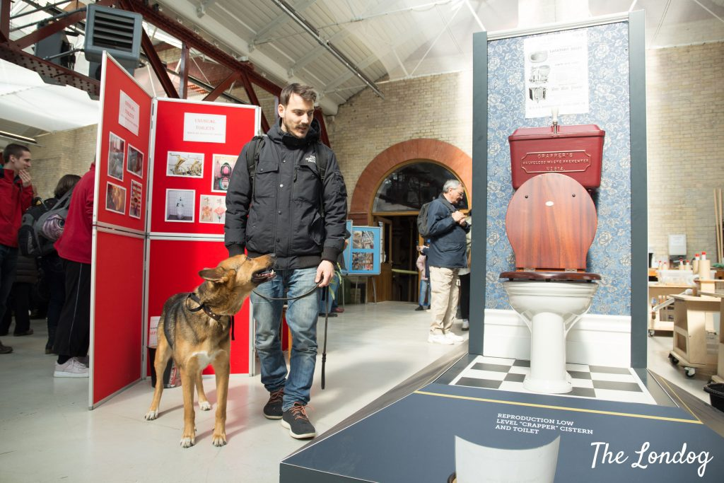Dog and owner walk across an exhibition displaying toilets