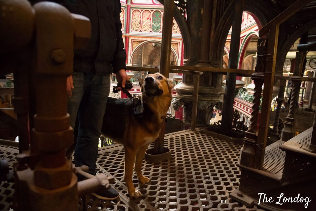 Dog at Prince Consort beam engine