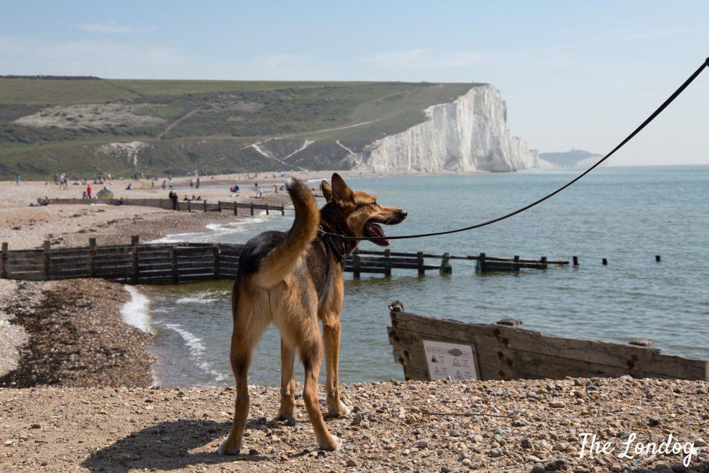 Dog on beach at Cuckmere Haven