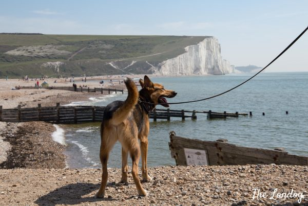 Dog on beach at Cuckmere Haven