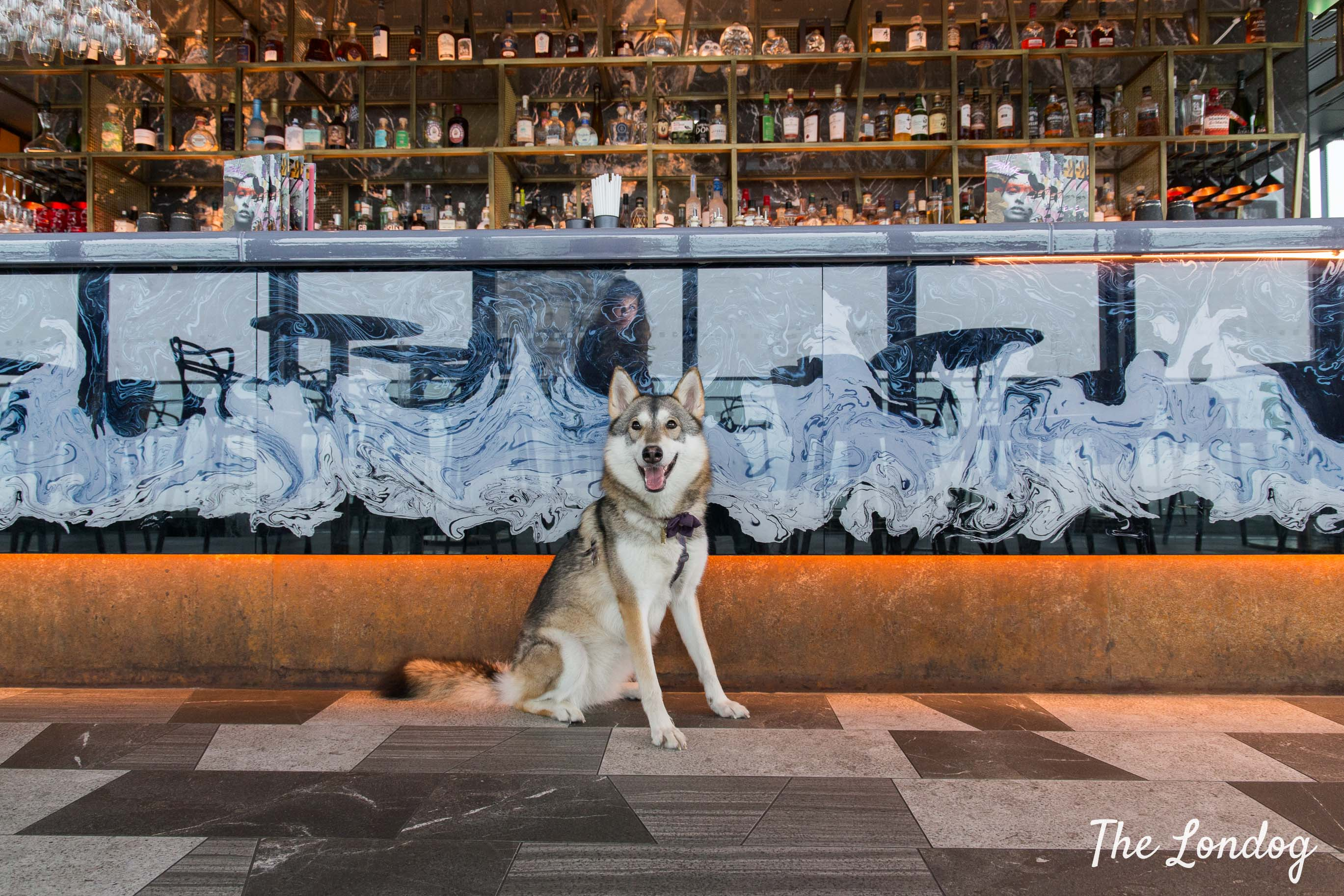 Large wolf-looking dog sits in front of bar counter at beautiful Savage Garden rooftop before dog brunch