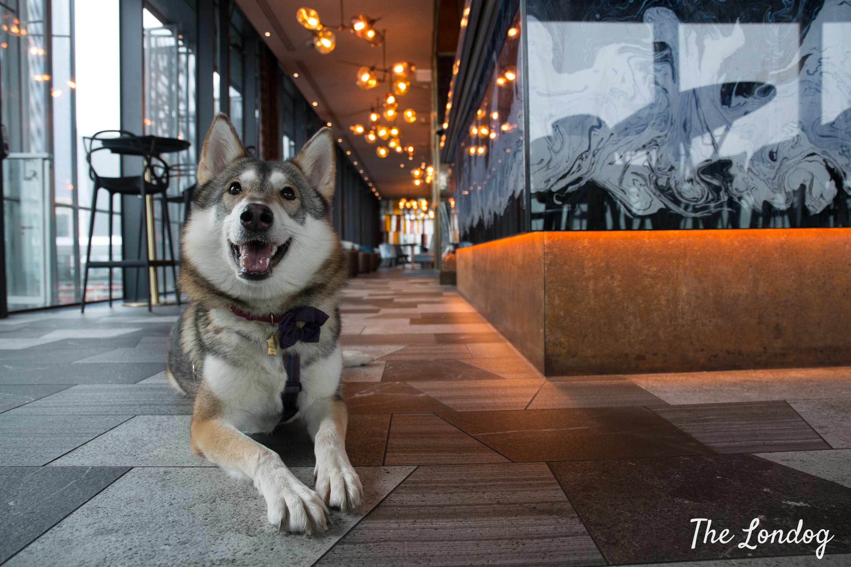Dog lies on the floor in the indoor area of Savage Garden rooftop, near the bar counter