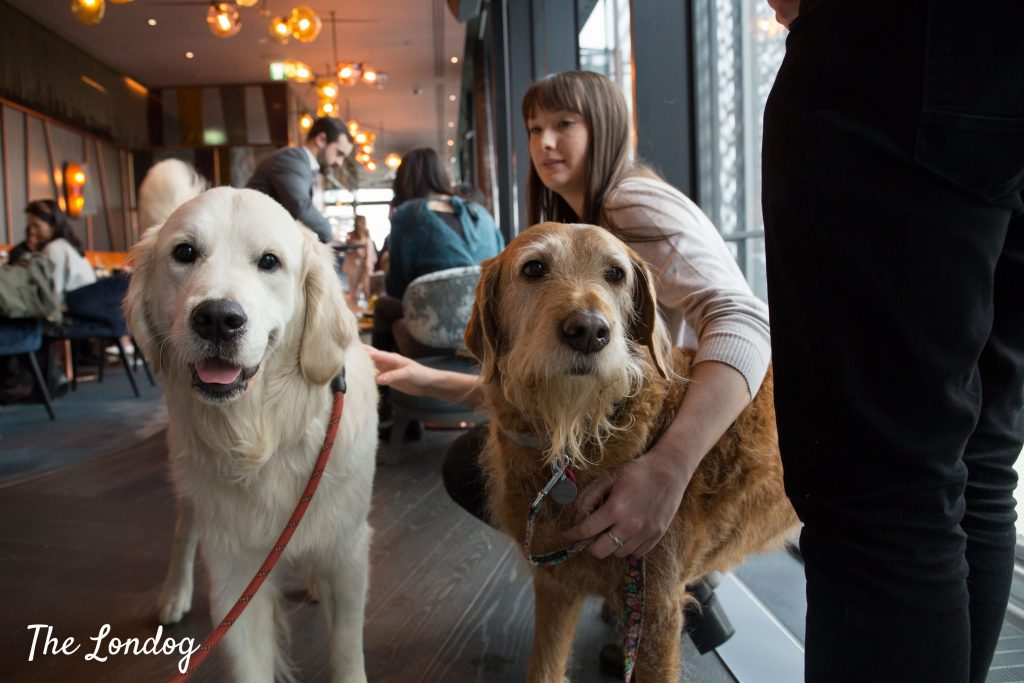 Two large dogs look at the camera during dog-friendly brunch at rooftop