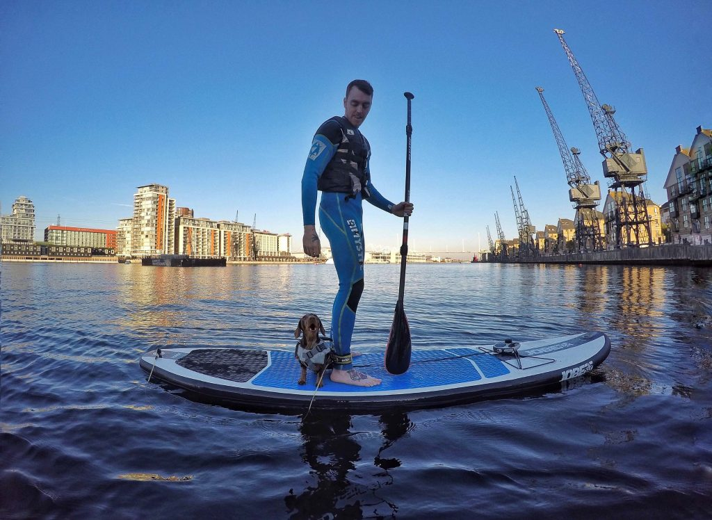 Miniature dachshund on SUP with owner in blue wetsuit in East London