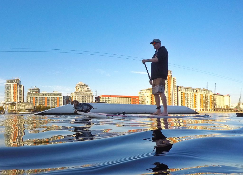 Man and dog paddle board at sunset in London