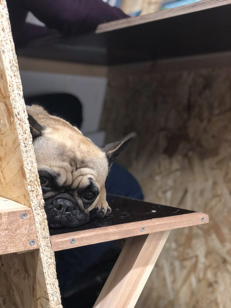 Frenchie dog chills out in a phone booth at The Ramp coworking space
