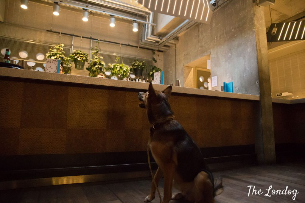 Large dog looks up on the counter at Ace Hotel ShoreditchShel