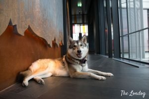 Dog lies down in corridor at Savage Garden rooftop
